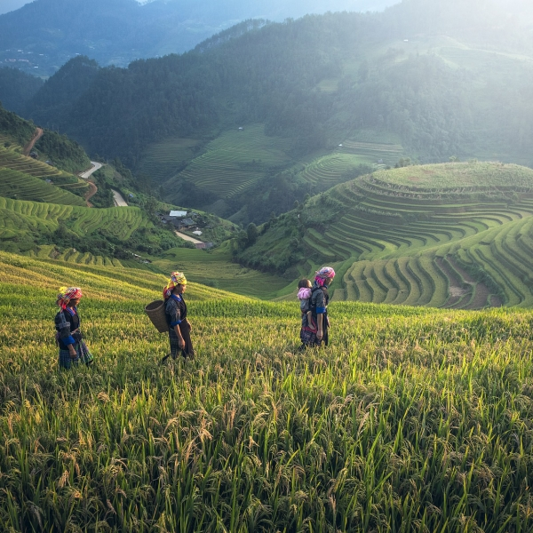 Sapa Hiking & Homestay Tour